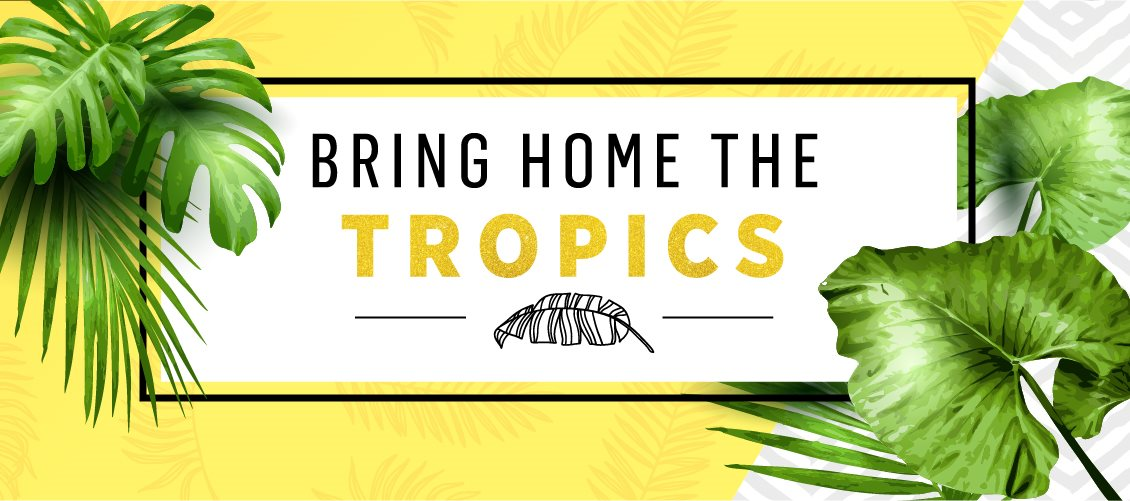 Bring Home the Tropics HEADER EN
