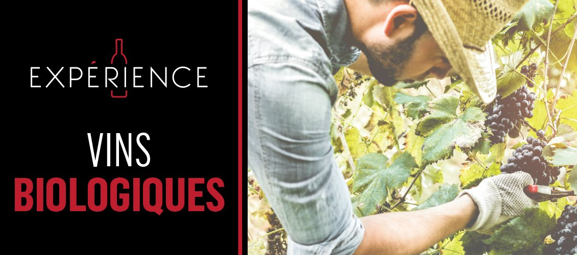P5-Experience-Header-OrganicWines-FR